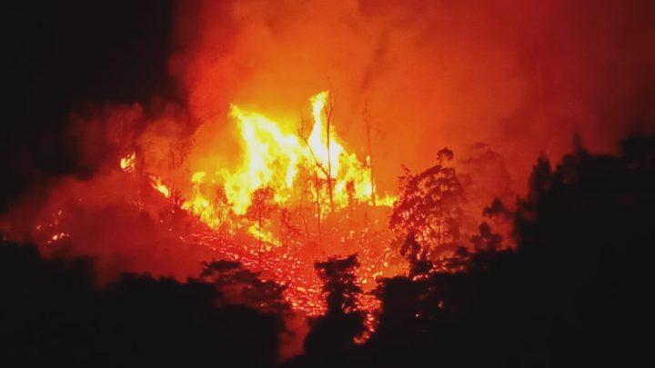 Hampir 20 Hektar Hutan di Ambon Terbakar